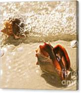 Conchs In Surf 2 Antique Canvas Print