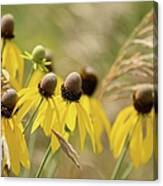 Cone Flower 8340 Canvas Print