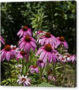 Cone Flower And Bee Canvas Print