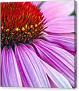 Cone Flower Blossom  Canvas Print