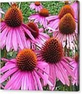 Cone Flowers 2 Canvas Print