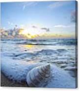 Cone Shell Foam Canvas Print