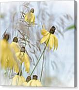 Coneflower And Bee 1  Canvas Print
