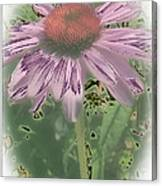Coneflower Calling Canvas Print