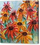 Coneflower Canvas Print