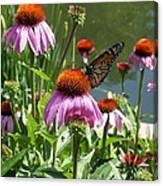 Coneflower With Butterfly Canvas Print