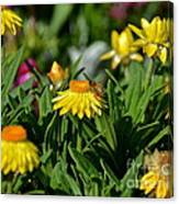 Coneflowers And Friend Canvas Print
