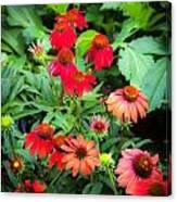 Coneflowers Echinacea Rudbeckia Canvas Print