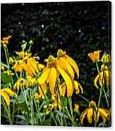 Coneflowers Echinacea Yellow Painted Canvas Print