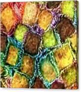 Confections Canvas Print