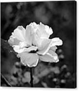 Confederate Rose Bw Canvas Print