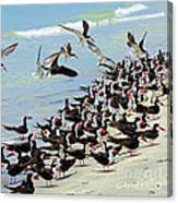 Congregating Skimmers Canvas Print