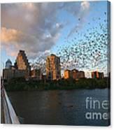 Congress Avenue Bats Canvas Print