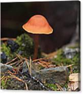 Conical Wax Cap Mushroom Canvas Print