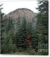 Conifer Country Canvas Print