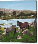 Connemara Ponies Canvas Print