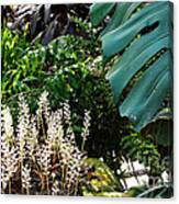 Conservatory Leaves Canvas Print