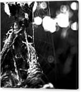 Contaminated Web Canvas Print
