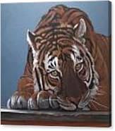 Contemplation Bengali Canvas Print
