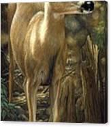 Mule Deer - Contemplation Canvas Print