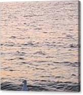 Contemplative Seagull Canvas Print