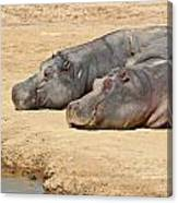 Contented Hippos Canvas Print