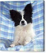 Continetal Toy Spaniel Or Papillon Dog Canvas Print