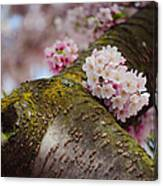 Contrast 1. Pink Spring In Amsterdam Canvas Print