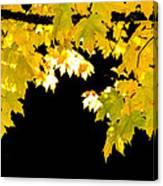 Contrast Of Autumn, Quincy California Canvas Print