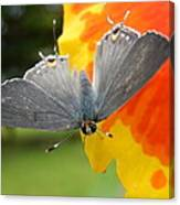 Contrasting Butterfly Canvas Print