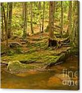 Cook Forest Rocks And Roots Canvas Print