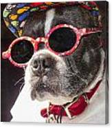 Cool Daddy Pooch Canvas Print