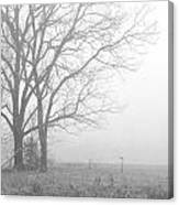 Cool Damp Foggy Canvas Print
