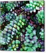 Cool Hued Burro's Tails In The Hot Desert Canvas Print