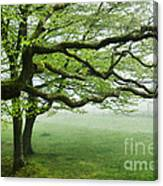 Cool Misty Day At Blackbury Camp Canvas Print
