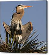 Great Blue Heron Air Conditioning Canvas Print