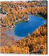 Cooney Lake Larches Canvas Print