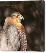 Coopers Hawk In Profile Canvas Print