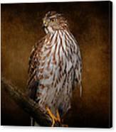 Coopers Hawk Portrait 1 Canvas Print