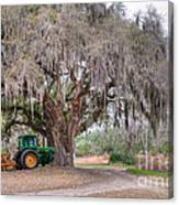 Coosaw Cross Roads With Live Oak Canvas Print