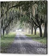 Coosaw Fog Avenue Of Oaks Canvas Print