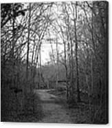 Coot Creek Canvas Print