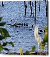 Coots On A Tree Canvas Print