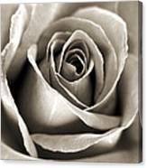 Copper Rose Canvas Print
