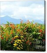 Coppertips On The Dingle Peninsula Canvas Print