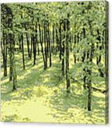 Copse Of Trees Sunlight Canvas Print