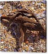 Coral Beach Treasure  Canvas Print