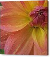 Coral Beauty Dahlia Canvas Print