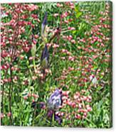 Coral Bells And Irises Canvas Print