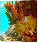 Coral Fern Canvas Print